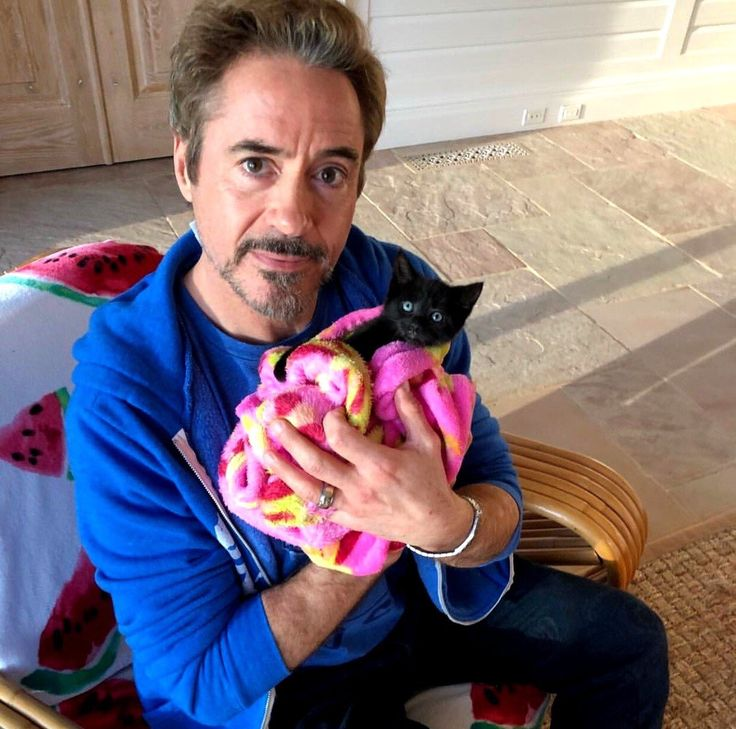I don't know which is more adorable, RDJ or the kitten