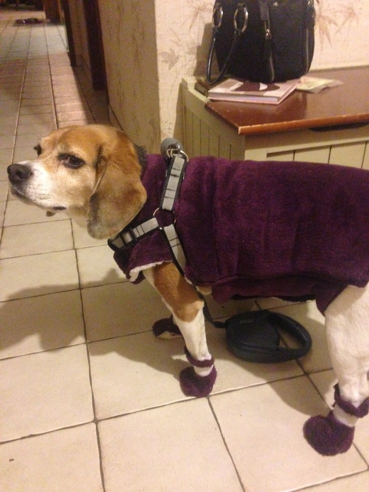 Dog coat and booties