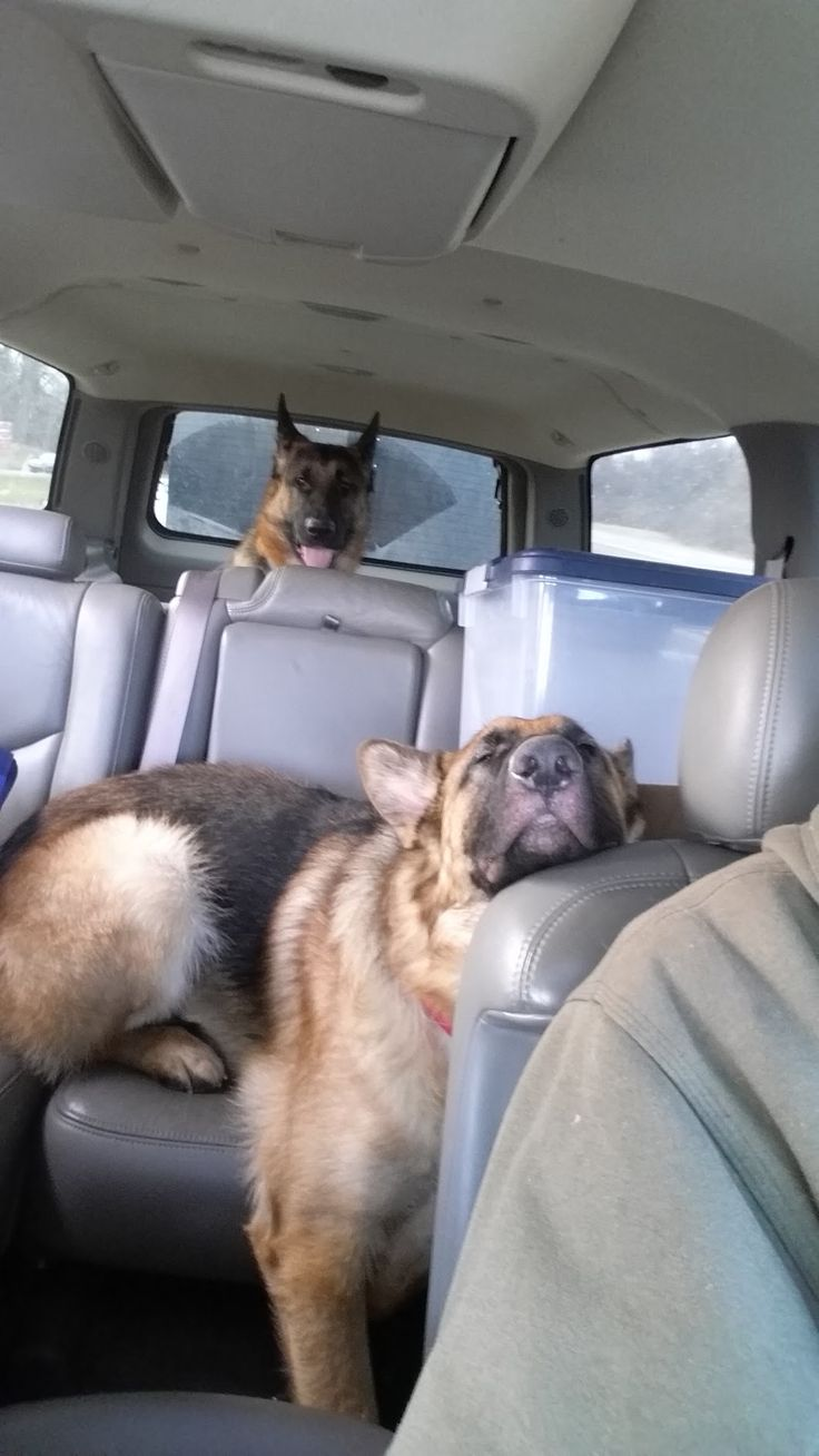 """#GSDs From your friends at phoenix dog in home dog training""""k9katelynn"""" see more about Scottsdale dog training at k9katelynn.com! Pinterest with over 18,300 followers! Google plus with over 120,000 views! You tube with over 400 videos and 50,000 views!! Twitter over 2200 followers!!"""