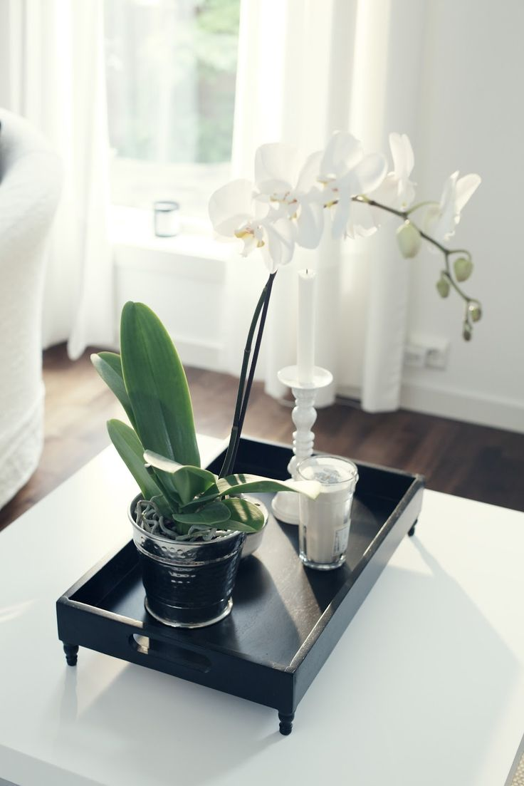 http://mykeminutter.blogspot.no:   My living room. Love orchids. Tray from Day Home. Candle from Tine K.