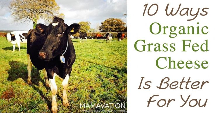 10 Ways Organic Grass-fed Cheese is Better for You
