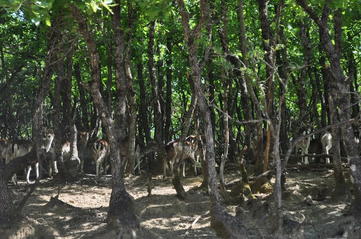 Wildlife Refuges/ Καταφύγια Άγριας Ζωής