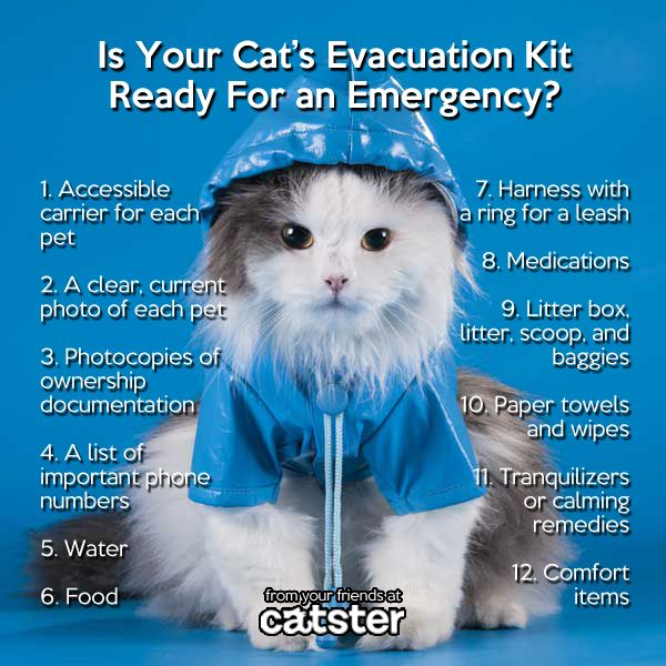 Tips for Evacuating with Cats... What you need to know in case of an emergency, and what should be in your pet's evacuation kit.