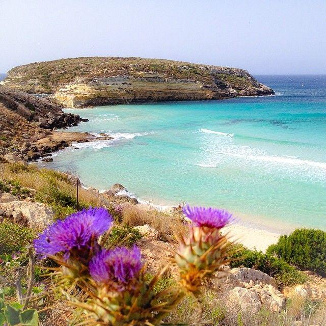 La più bella d'Europa: la Spiaggia dei Conigli #Lampedusa #Sicilia