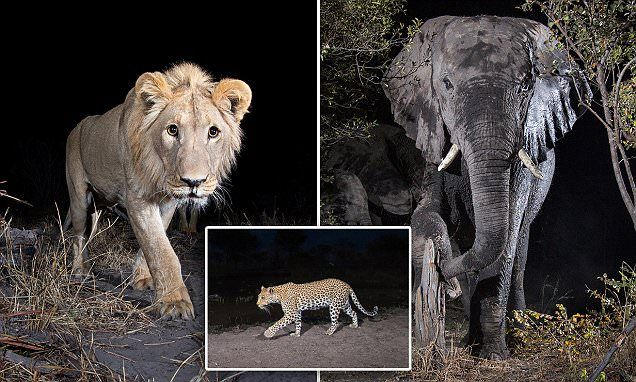 Incredible images of Africa's most elusive wildlife in Zambezi region