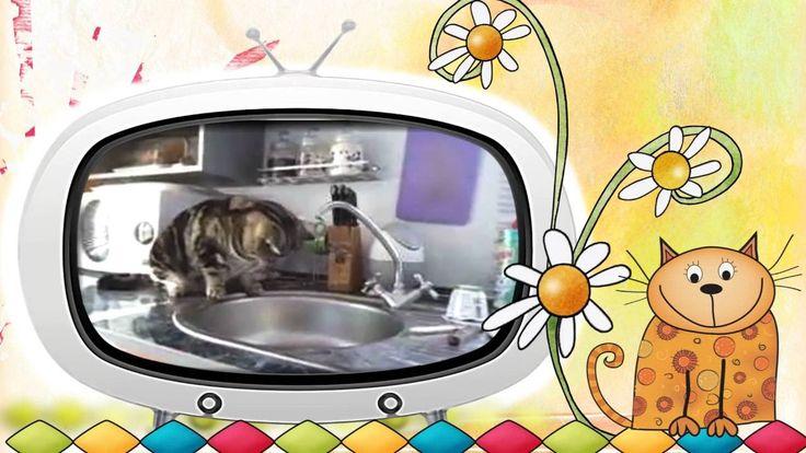 Видео клип #Коты и #вода. Как #коты и #кошки дружат с водой