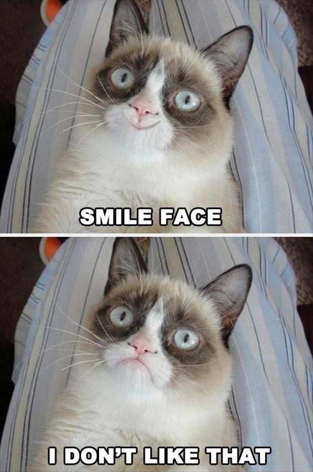 grumpy cat wedding invitations%0A grumpy cat  smile face  Dump A Day
