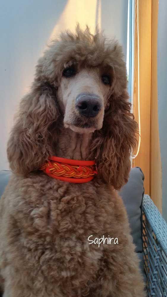 Hundehalsband Leder Breite Halsbänder Halsband für Windhunde Sighthound Dog Collar Whippets Leather italian Greyhound products Galgo Afghanischer Afghan Hound