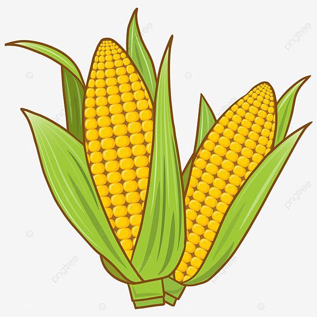 Pequeno Elemento De Crecimiento De Maiz Fresco De Dibujos Animados Pintado A Mano Dibujos Animados Planta Png Y Vector Para Descargar Gratis Pngtree En 2021 Verduras Dibujo Dibujos Maiz Dibujo