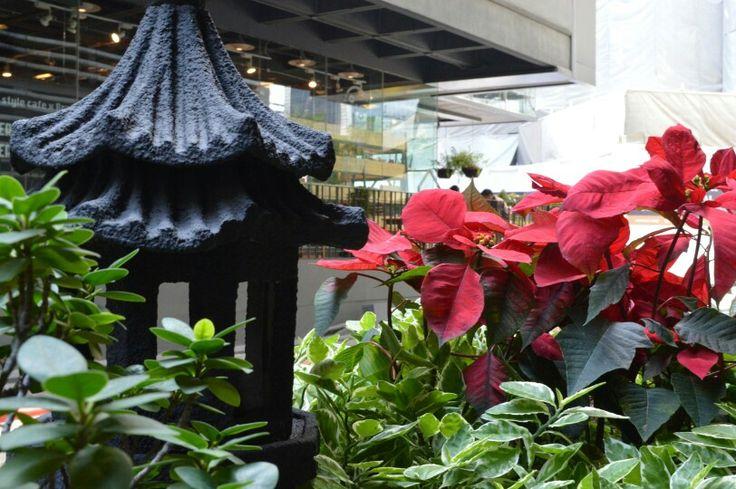Siam Flowers
