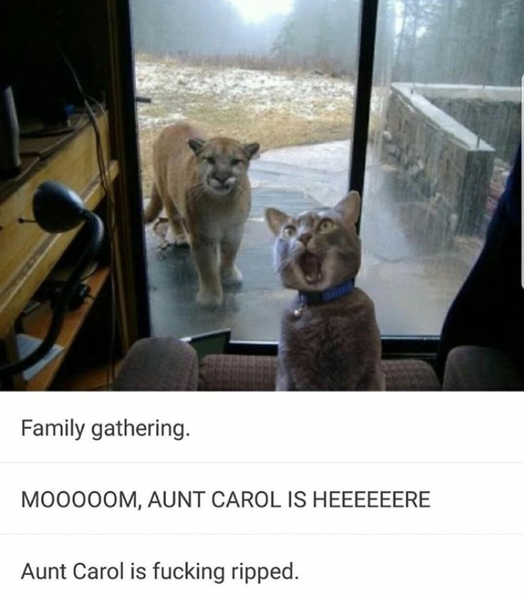 Are Cats And Dogs Self Aware