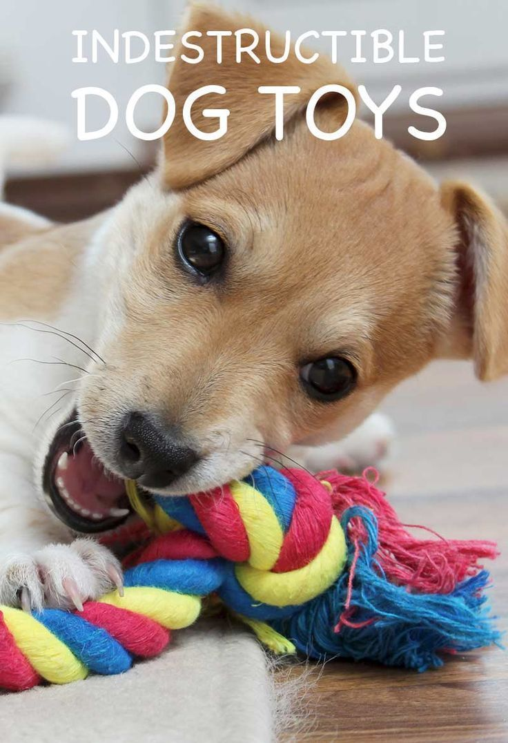 Best Indestructible Dog Toys A Complete Guide With Tips And