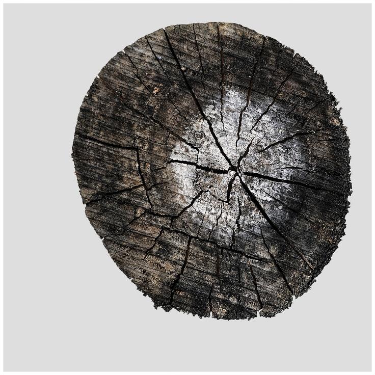 Stump 8