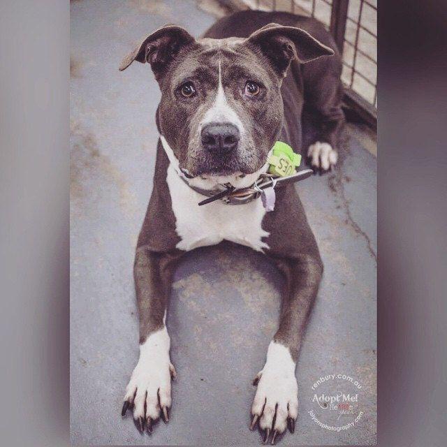 #mynameisdemona #adoptme #adoptable #adoptdontshop #renburyfarm #renburyfarmanimalshelter #rescuedisthebestbreed #rescuepetsofinstagram #rescueme #heartsspeak #dogsofsydney #dogs_of_instagram #dogsofinstagram #dogsofaustralia