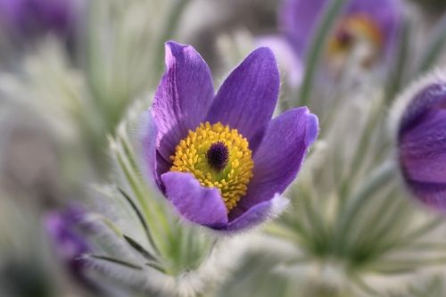 Az első tavaszi virágok | Kerti munkák | Kertportál.hu