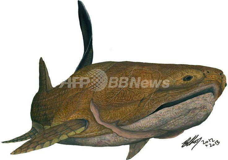 中国で化石が発見された古代魚「Entelognathus primordialis」の想像図(2013年9月24日提供)。(c)AFP/NATURE/CHINESE ACADEMY OF SCIENCES/BRIAN CHOO ▼26Sep2013AFP|人類進化の定説覆す魚類化石、中国で発見 http://www.afpbb.com/articles/-/3000185