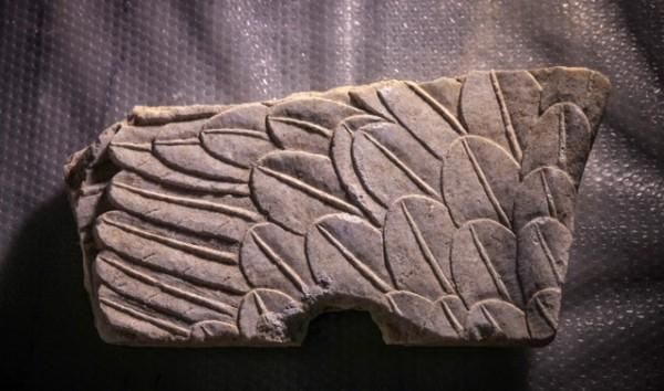 A part of the wings of a Sphinx