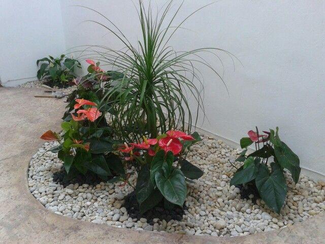 Hermoso y pequeño jardin