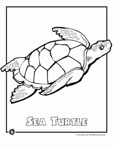 ENDANGERED OCEAN ANIMALS  Sea Turtle Endangered Animal Coloring Page