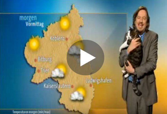 This Cute Cat Interrupts German Weather Broadcast And Demands Cuddles! CUTEST THING!