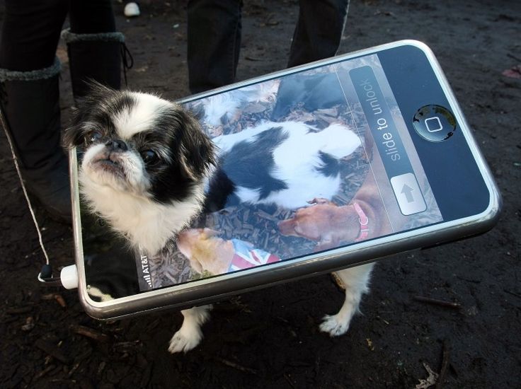 iPhone pet costume - well done... pic of dog's body while looking down at ground as phone wallpaper, leash as headphone wire...
