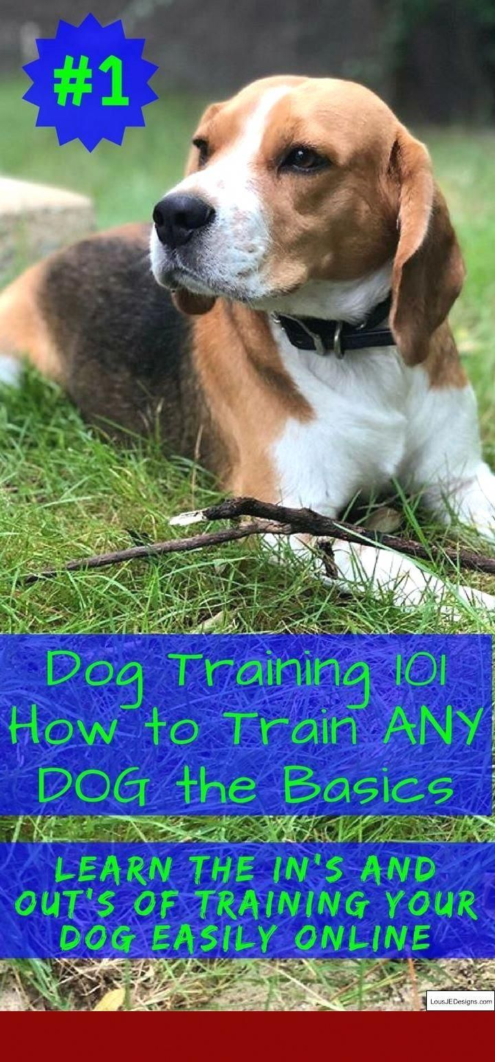 How To Stop A Dog S Barking In The Yard Dogs Dog Barking Stop