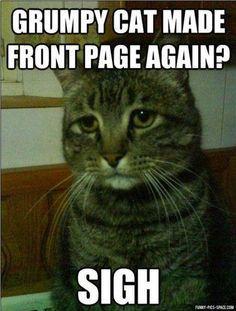 a30e70d40f9d8725462a3e4b39de9b80 cat memes book jacket 106 best viral memes images on pinterest cat memes, girlfriend,Chronic Illness Cat Meme