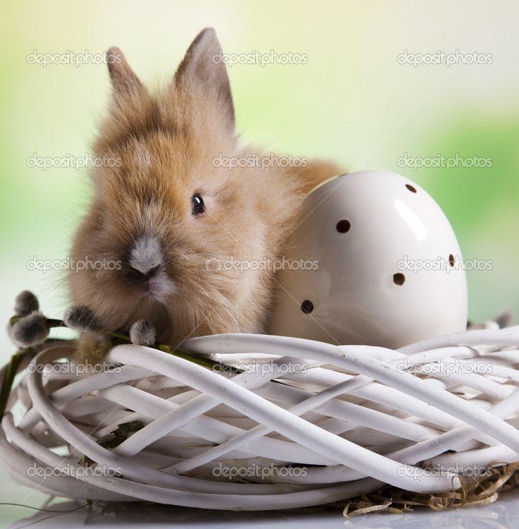 Crafts I Dinner I Breakfast I Jesus I Christianity I Food I Dessert I Brunch I Rabbit I Easter Eggs I