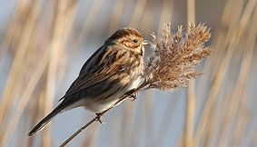 The North West Bird Watching Festival, 23rd Nov - 24th Nov @ Martin Mere Wetlands Centre