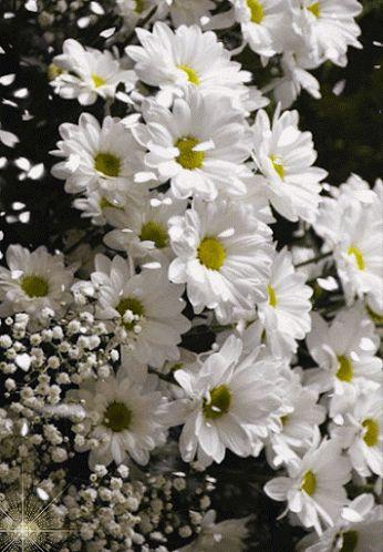 Resultado de imagem para gif flores