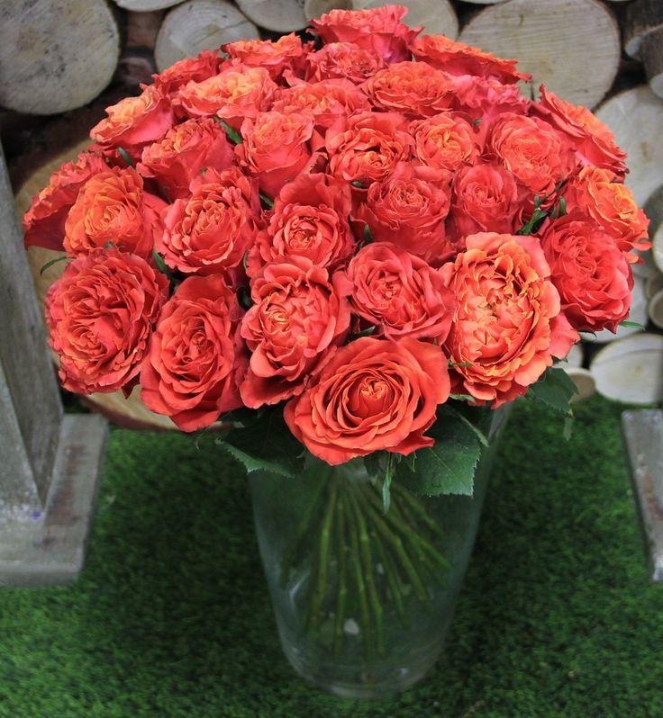 Дорогие наши клиенты! Мы напоминаем вам о наших АКЦИЯХ! Одна из них на такие красивые розы! Роза 50 см ---- 69 RUB Заказ и доставка 203 88 22 Количество ограничено. kaktus59.ru #розы#акция#розыдешево#кактуспермь#цветыпермь#налетай#подешевело#красотапокактусовски#розочки#длядевушки#нежные#яркие