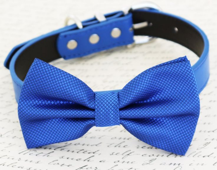 Royal blue dog Bow tie,Bow attached to blue dog collar, pet wedding accessory, birthday gift, some thing blue, dog accessory, Beach wedding