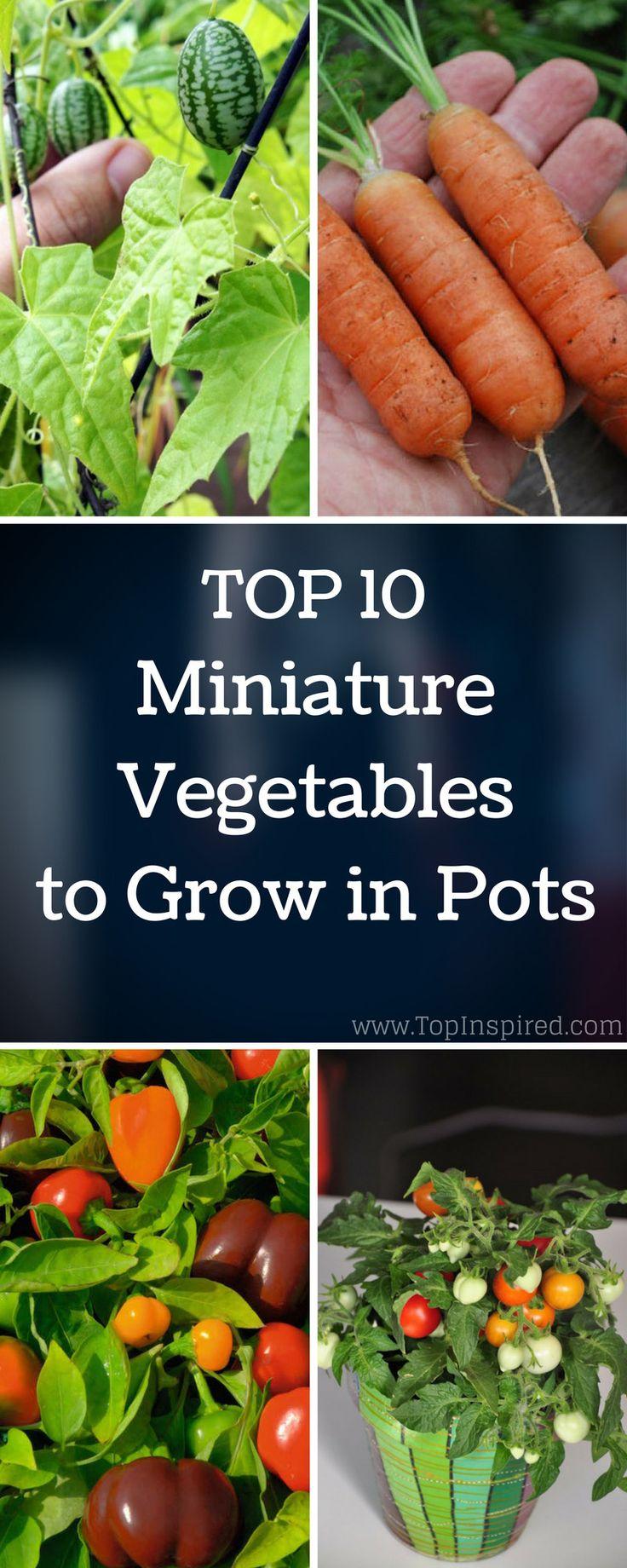 Top 10 Miniature Vegetables To Grow In Pots Growing 400 x 300