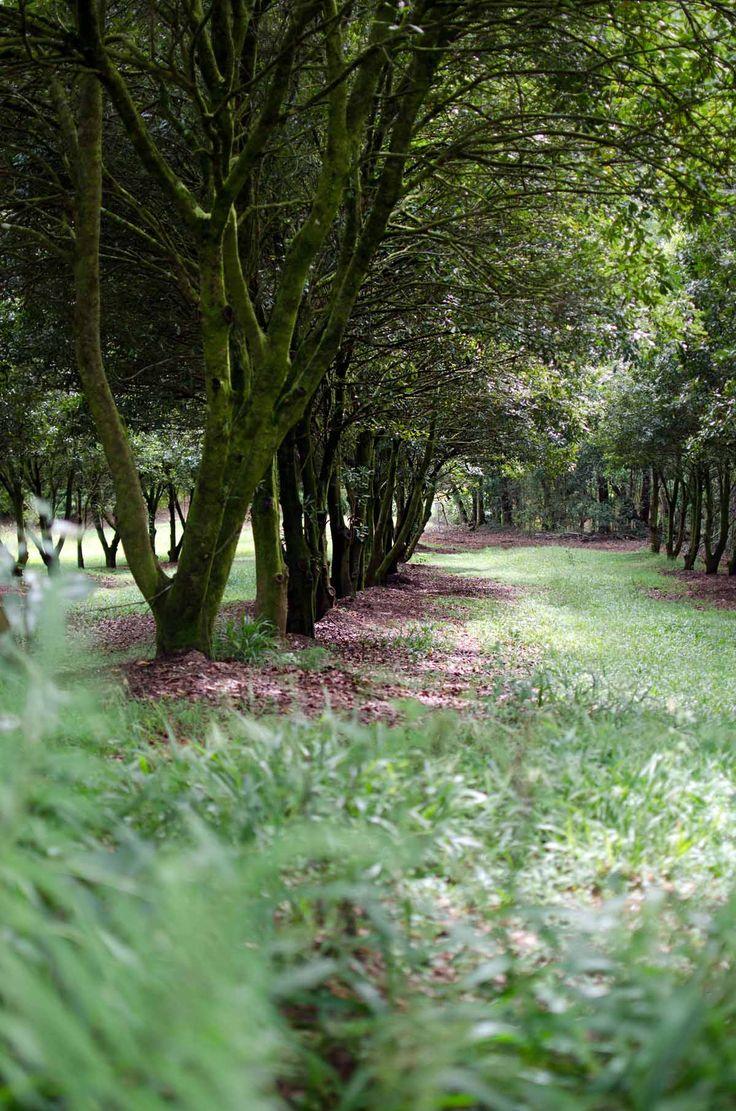 Brookfarm macadamia trees | heneedsfood.com