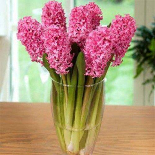 Цветы луковицы 2012 купить купить цветы оптом в выборге