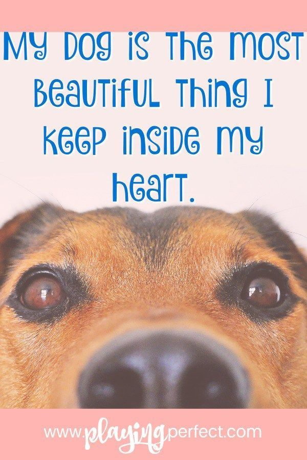 Is your dog filling up your heart?! Dogs are so easy to love! If you're a dog parent, get ready to smile with these dog quotes that remind us why dogs are the best things to keep in our hearts! If you're a dog mom or a dog dad you're going to love these quotes about dogs! FREE printable! | playingperfect.com #dog #dogs #dogmom #dogmoms #dogdad #dogdads #dogquote #dogsarethebest #ilovemydog #dogquotes #puppies #puppy #bigdogs #cutedog #playingperfect #quotes #quotesandsayings #happyquotes