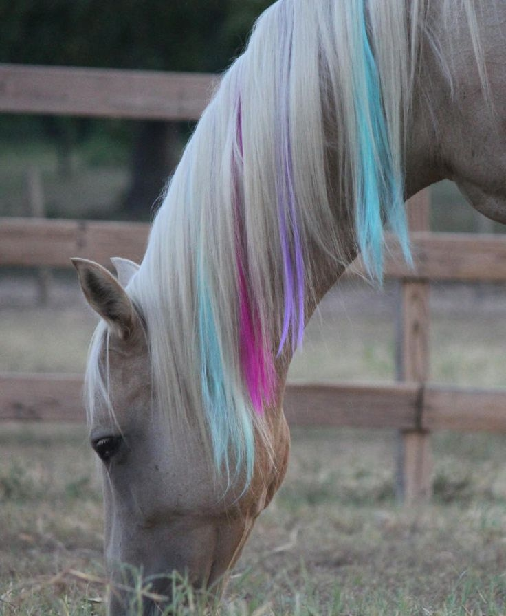108 Best Horse Tail Main Images On Pinterest Beautiful Horses