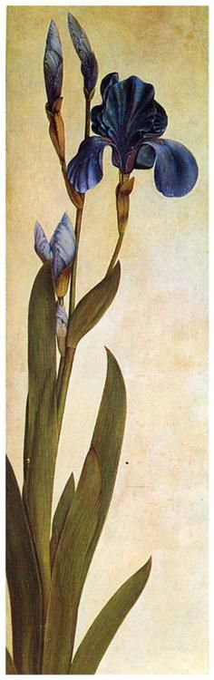 Albrecht Durer, 'Iris Troiana' 1508, watercolor & ink on paper.  - For Lois Field Woodcock.