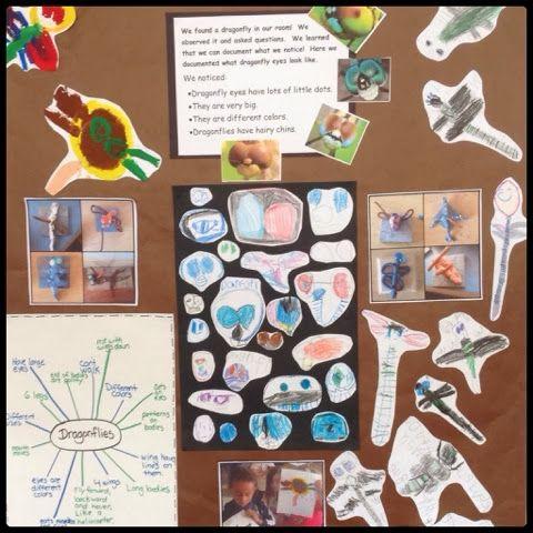 Inquiring Minds: Mrs. Myers' Kindergarten: Documenting Dragonflies Through Art- final documentation panel