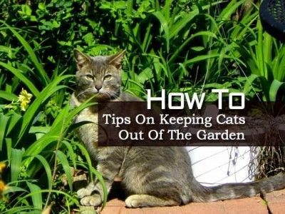 How To Tips On Keeping Cats Out Of The Garden Gardening Yard Ideas And Tips Pinterest