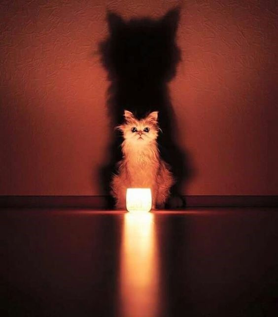 These Animals Look Like They're Performing A Satanic Ritual And It's Creepy – Lisa Boniface-Opaleychuk