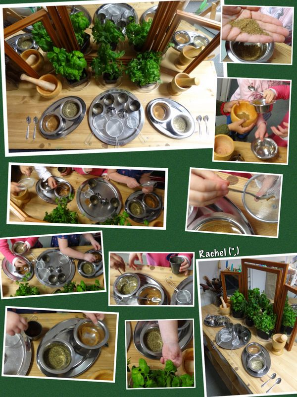 """Exploring herbs and spices from Rachel ("""",) Gingerbread Man unit"""