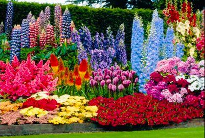 Best Perennial Flower Plants & Photos of Garden Perennials