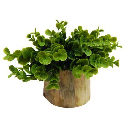 Varick Gallery® Faux Naturalist Eucalyptus Bonsai Desk Top Plant in Planter