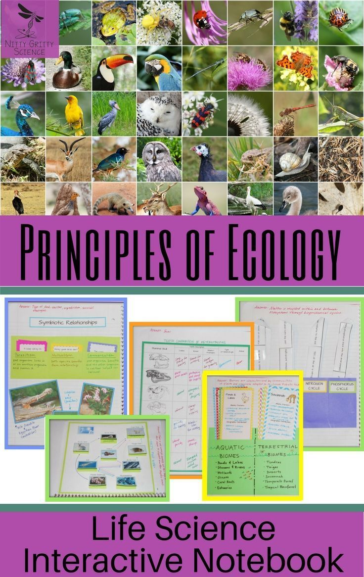 Principles Of Ecology Life Science Interactive Notebook Include The Following Concepts Nutrit Interactive Science Notebook Principles Of Ecology Life Science