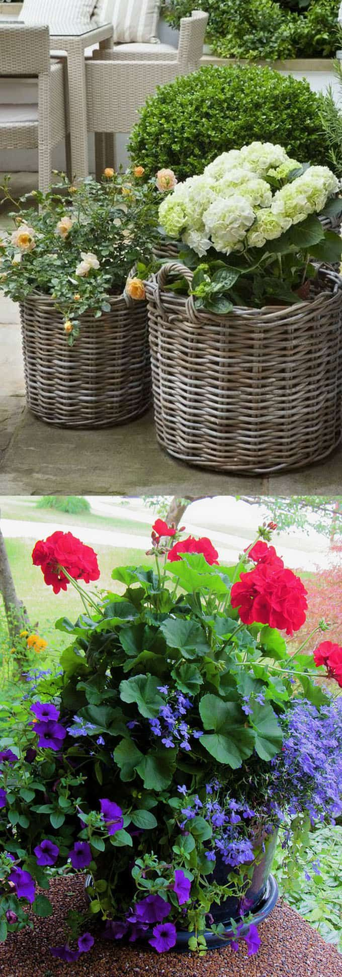 24 Beautiful Container Backyard Planting Designs