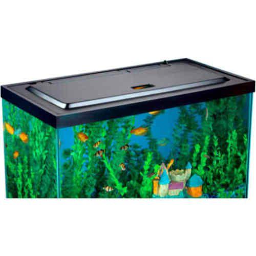 17 best ideas about 55 gallon aquarium on pinterest 55 for Fish tank 20 gallon