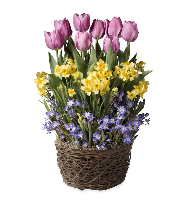 Flower Bulb Baskets : Best flower gardens gifts images on