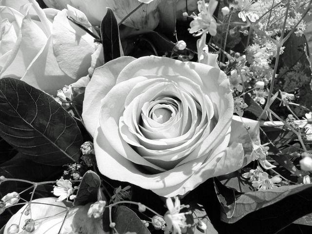 flower-113216_640.jpg (640×480)