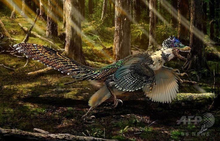 約1億2500万年前の中国北東部遼寧省に生息していたとされる肉食恐竜「チェンユアンロン・スニ」。翼と短い腕を持ち、体は羽毛に覆われている。鼻先から尾の先端までの全長が約2メートル、体重が約20キロで、翼を持つ恐竜としては、これまでに発見された中で最大。図は中国国土資源省公開(2015年7月15日公開)。(c)AFP/Ministry of Land and Resources of China ▼17Jul2015AFP|【特集】古代生物図鑑~太古に生きた奇妙な動物たち http://www.afpbb.com/articles/-/3002031 #Zhenyuanlong_suni #孙氏振元龙 #孫氏振元龍